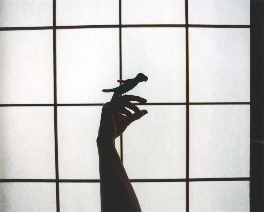 「Parrot」2009、C-print